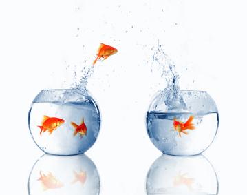 peces-mudanza