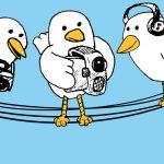Permitir publicación de fotos y videos en BuddyPress