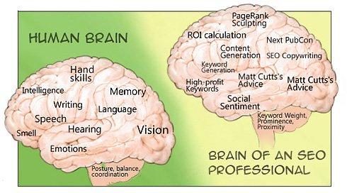 cerebro humano cerebro seo